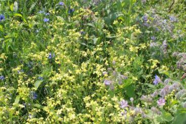veldbloemen tuinkruiden mengsel